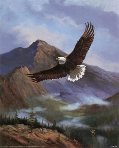 Eagle Gliding-M^ Caroselli-Art Print