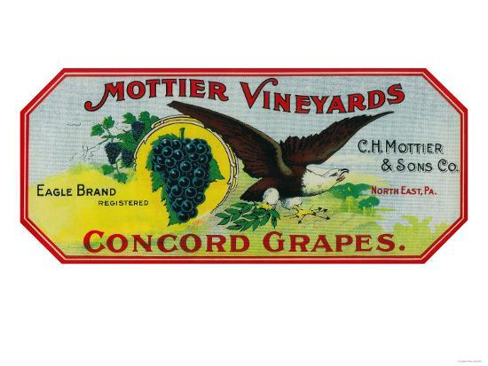 Eagle Grapes Label - North East, PA-Lantern Press-Art Print