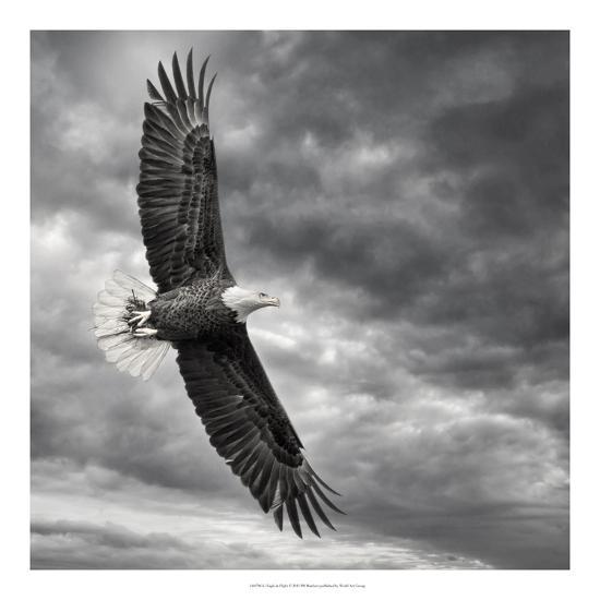Eagle in Flight-PHBurchett-Art Print