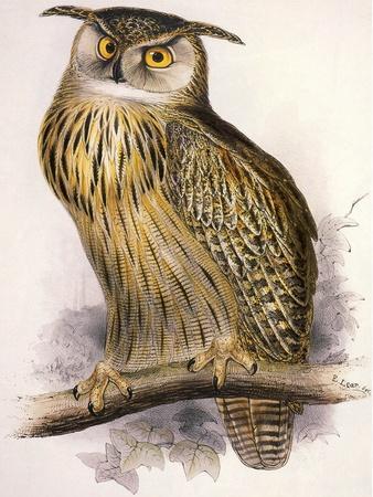 https://imgc.artprintimages.com/img/print/eagle-owl-bubo-maximus_u-l-q1bvjwl0.jpg?p=0