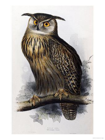 https://imgc.artprintimages.com/img/print/eagle-owl-lithographic-plate-from-the-birds-of-europe_u-l-o62yk0.jpg?p=0