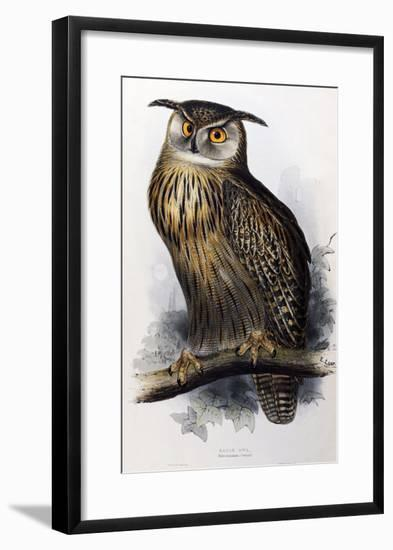 "Eagle Owl, Lithographic Plate from ""The Birds of Europe""-John Gould-Framed Giclee Print"