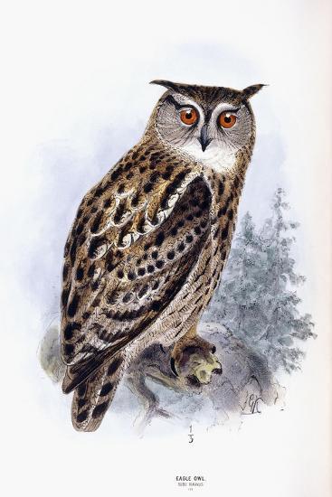 Eagle Owl-Johan Gerard Keulemans-Giclee Print