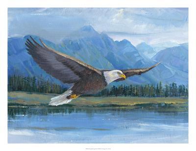 Eagle Soaring-Tim O'toole-Art Print