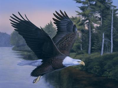 Eagle Soaring-Rusty Frentner-Giclee Print