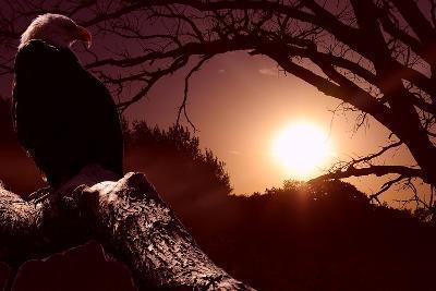 Eagle Sunrise-Gordon Semmens-Photographic Print