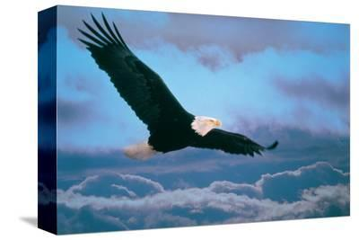 Eagle--Stretched Canvas Print