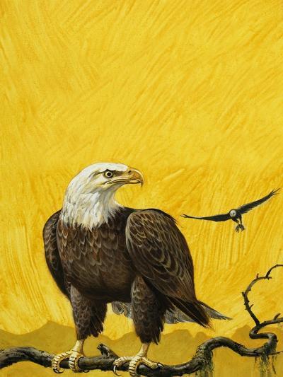 Eagle-English School-Giclee Print