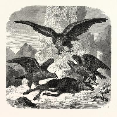 Eagles Fighting over a Chamois, Mountains, 1855--Giclee Print