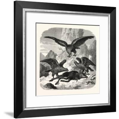 Eagles Fighting over a Chamois, Mountains, 1855--Framed Giclee Print