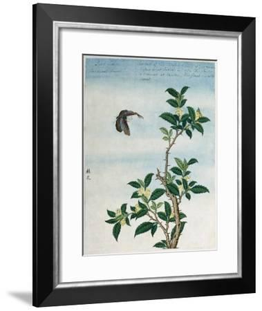 Early 19th-Century Chinese Watercolor of a Cinnamon Plant--Framed Giclee Print