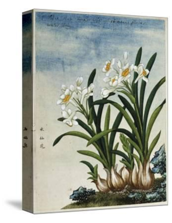 Early 19th-Century Chinese Watercolor of Daffodils