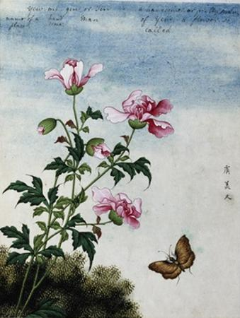 Early 19th-Century Chinese Watercolor of Pink Flowers