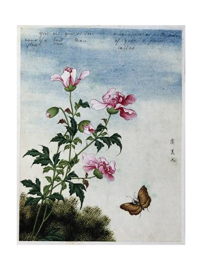 Early 19th-Century Chinese Watercolor of Pink Flowers--Giclee Print