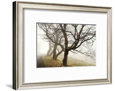 Early Morning Calm-David Winston-Framed Giclee Print