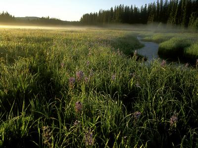 Early Morning Fog on Packer Meadows, Montana, USA-Chuck Haney-Photographic Print