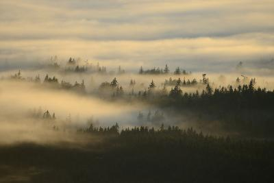 Early Morning Fog over the Olympic Mountains, from Hurricane Ridge-Raul Touzon-Photographic Print