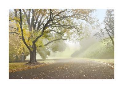 Early Morning Fog-Donald Satterlee-Giclee Print
