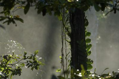 https://imgc.artprintimages.com/img/print/early-morning-light-in-the-rain-forest-of-halmahera-island-indonesia_u-l-q12x3i10.jpg?p=0