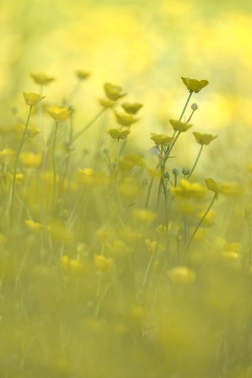 Early Morning Meadow-Kathleen Clemons-Photographic Print