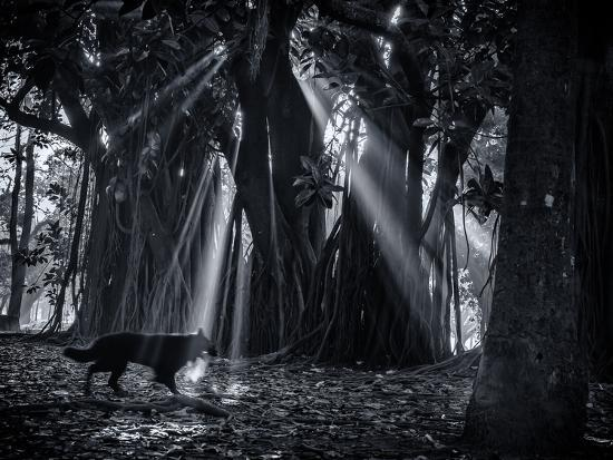 Early Morning Mist and Trees in Sao Paulo's Ibirapuera Park-Alex Saberi-Photographic Print