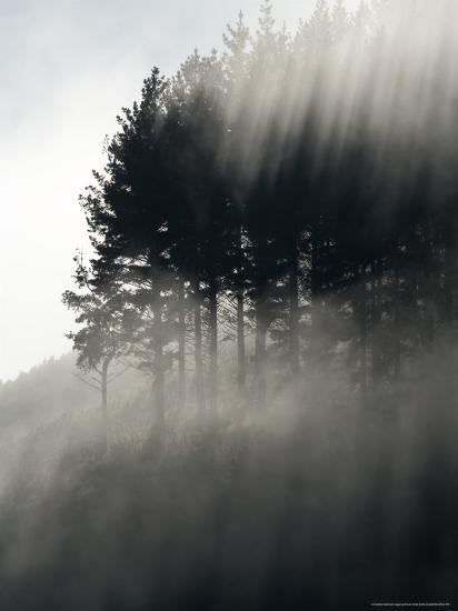 Early Morning Mist and Trees, State Highway 4 near Wanganui, North Island, New Zealand-David Wall-Photographic Print
