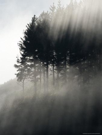 https://imgc.artprintimages.com/img/print/early-morning-mist-and-trees-state-highway-4-near-wanganui-north-island-new-zealand_u-l-p598sk0.jpg?p=0