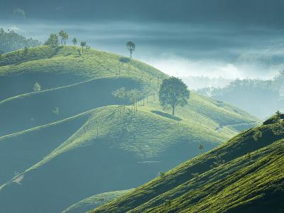 Early Morning Mist over Tea Plantations, Near Munnar, Kerala, India, Asia-Stuart Black-Photographic Print