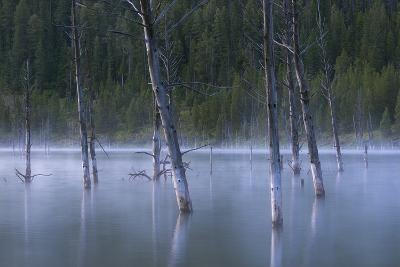 Early Morning Mist Rising Off Of Earthquake (Quake) Lake In SW Montana, Near West Yellowstone-Austin Cronnelly-Photographic Print