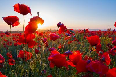 Early Morning Red Poppy Field Scene-Yuriy Kulik-Photographic Print