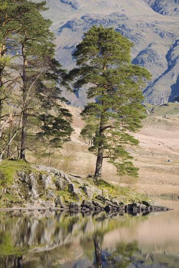 Early Morning Reflections, Blea Tarn, Above Little Langdale-Ruth Tomlinson-Photographic Print