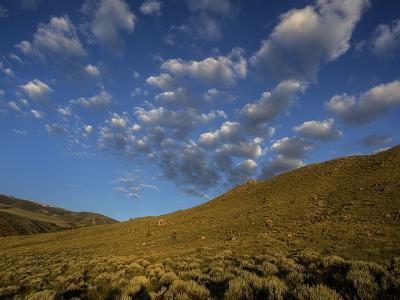 Early Morning Sunlight on a Landscape of Sagebrush with Fluffy Clouds Overhead-Jay Dickman-Photographic Print