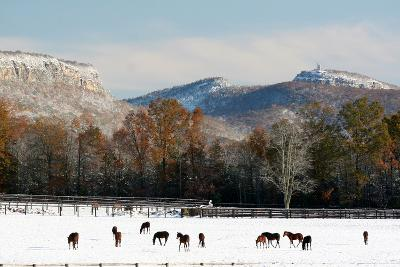 Early Snow Horse Paddock-Robert Goldwitz-Photographic Print