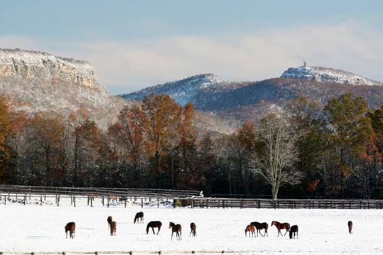 Early Snow Horse Paddock-Robert Goldwitz-Photographic Print