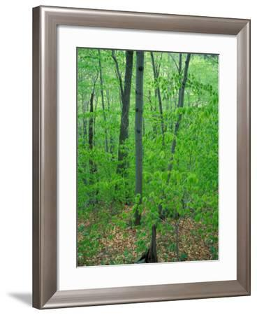 Early Spring in Caribou-Speckled Wilderness Area, Caribou Mountain, Maine, USA-Jerry & Marcy Monkman-Framed Photographic Print