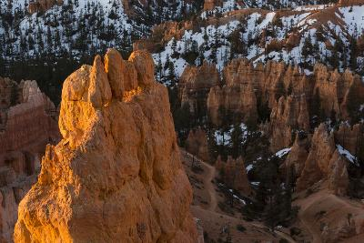 Early Sunrise Light Illuminating The Hoodoos Of Bryce Canyon, Bryce Canyon National Park, Utah-Mike Cavaroc-Photographic Print
