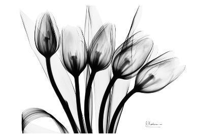 Early Tulips N Black and White-Albert Koetsier-Art Print