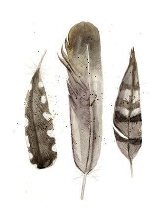 https://imgc.artprintimages.com/img/print/earthtone-feathers-ii_u-l-q11k2gr0.jpg?p=0