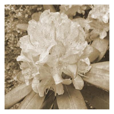 https://imgc.artprintimages.com/img/print/earthy-flower_u-l-f8dzld0.jpg?p=0