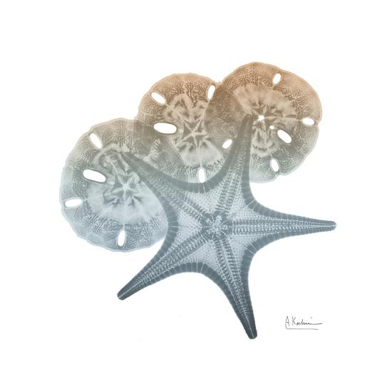 Earthy Hues Starfish and Sand Dollar-Albert Koetsier-Art Print