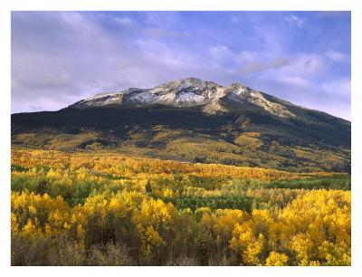 East Beckwith Mountain and trees in fall color, Gunnison National Forest, Colorado-Tim Fitzharris-Art Print