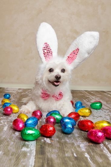 Easter Bunny Dog With Chocolate Easter Eggs-lovleah-Photographic Print
