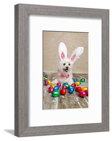 decortive ester ccents easter rabbit decor bunny.htm easter bunny dog with chocolate easter eggs photographic print by  dog with chocolate easter eggs