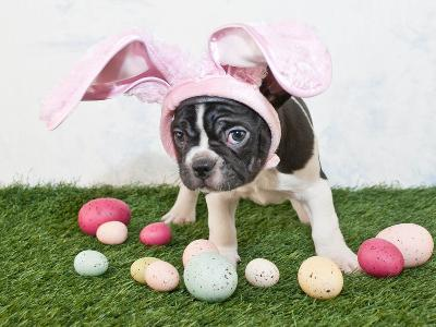 Easter Bunny Puppy- JStaley401-Photographic Print