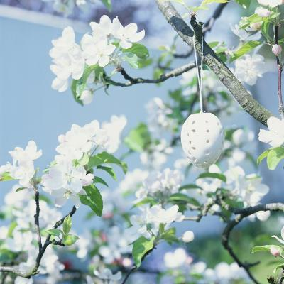 Easter Egg on Flowering Branch-Lili K^-Photographic Print