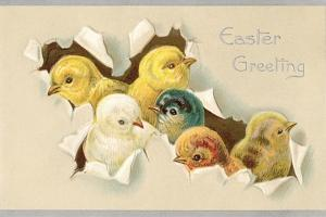 Easter Greeting, Chicks