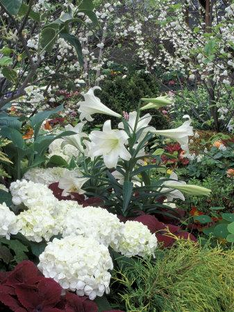https://imgc.artprintimages.com/img/print/easter-lilies-and-hydrangea-flowers_u-l-p5agyy0.jpg?p=0