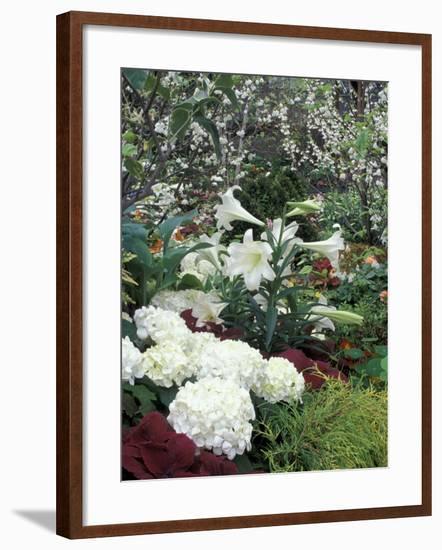 Easter Lilies and Hydrangea Flowers-Adam Jones-Framed Photographic Print