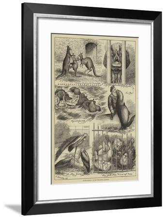Easter Monday at the Zoological Gardens-Stanley Berkeley-Framed Giclee Print