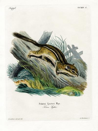 Eastern Chipmunk--Giclee Print